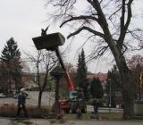 12.09.2013 JSDHO BABICE - Kácení rizikových stromů